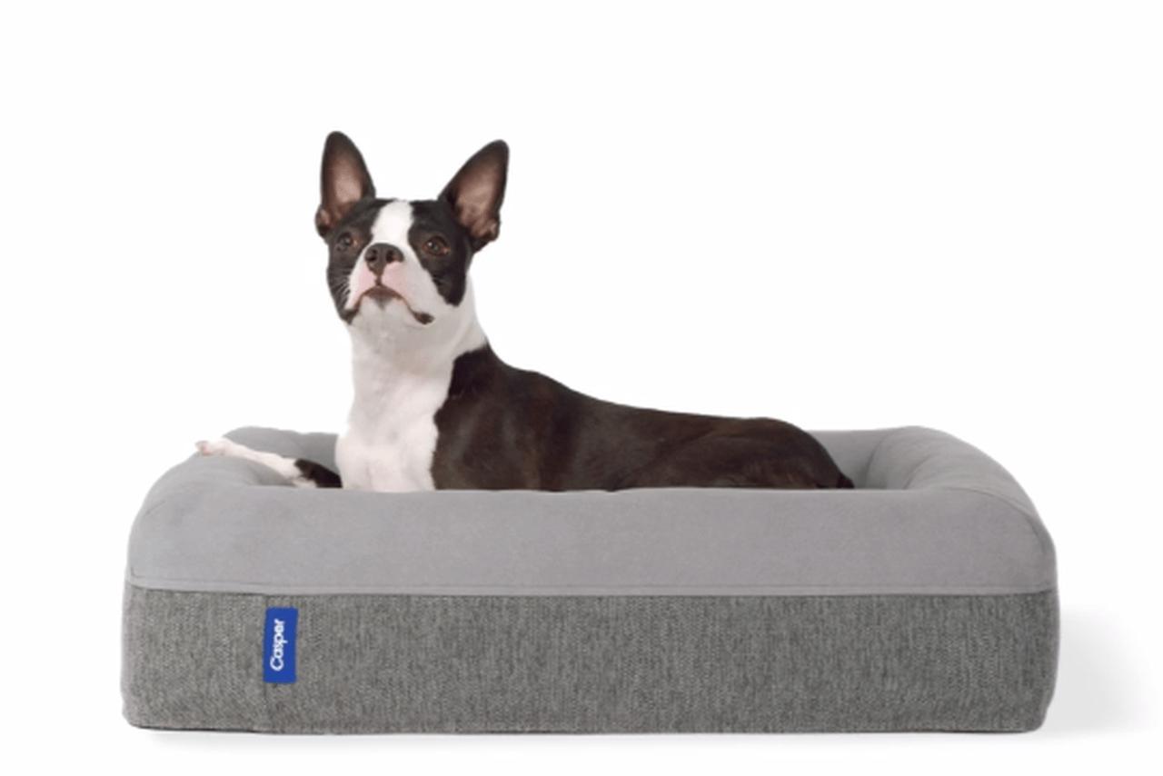 Casper Dog Mattresses for Your Pet