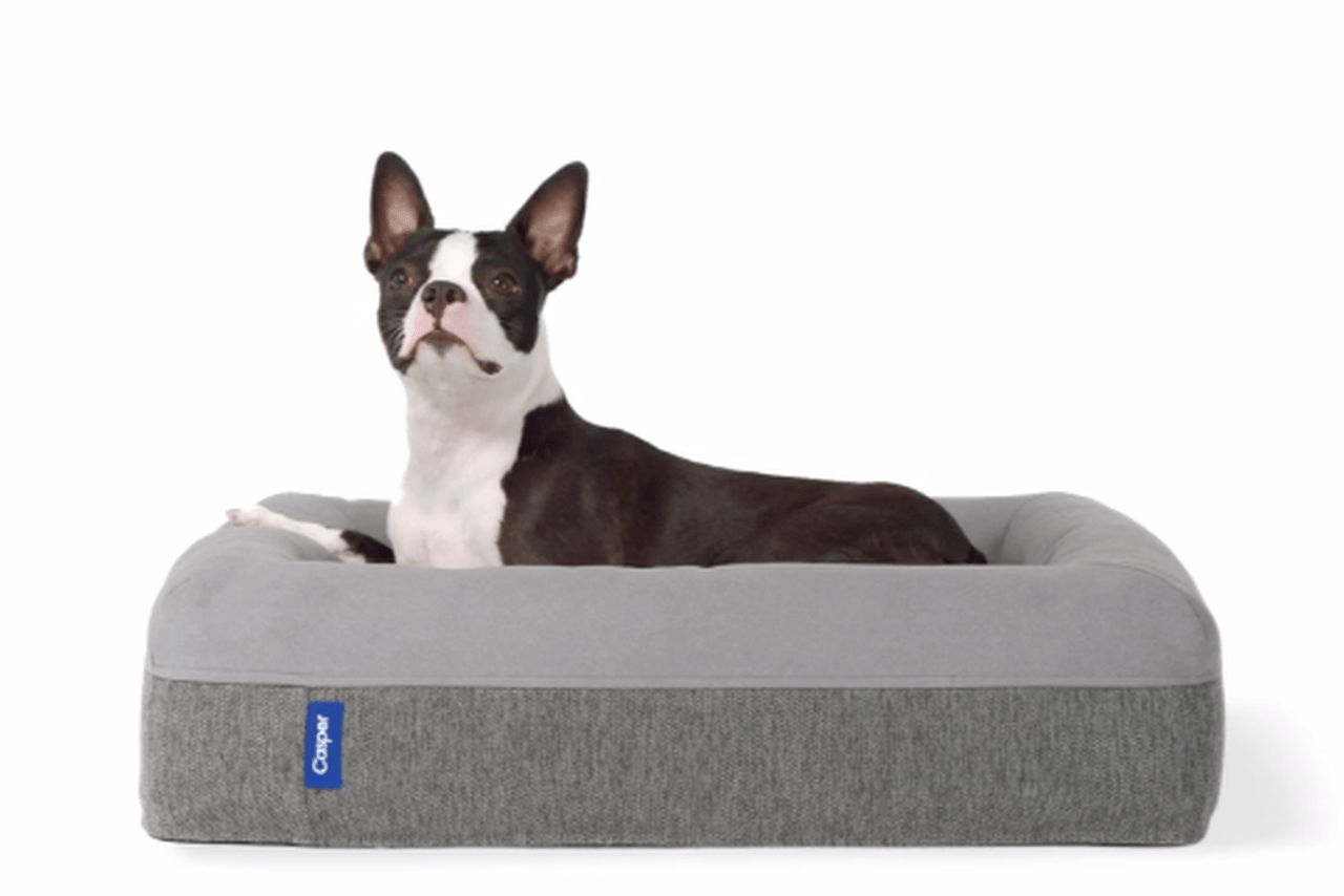 Casper Dog Mattresses for Your Pet