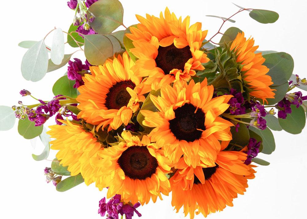 UrbanStems Sunflowers