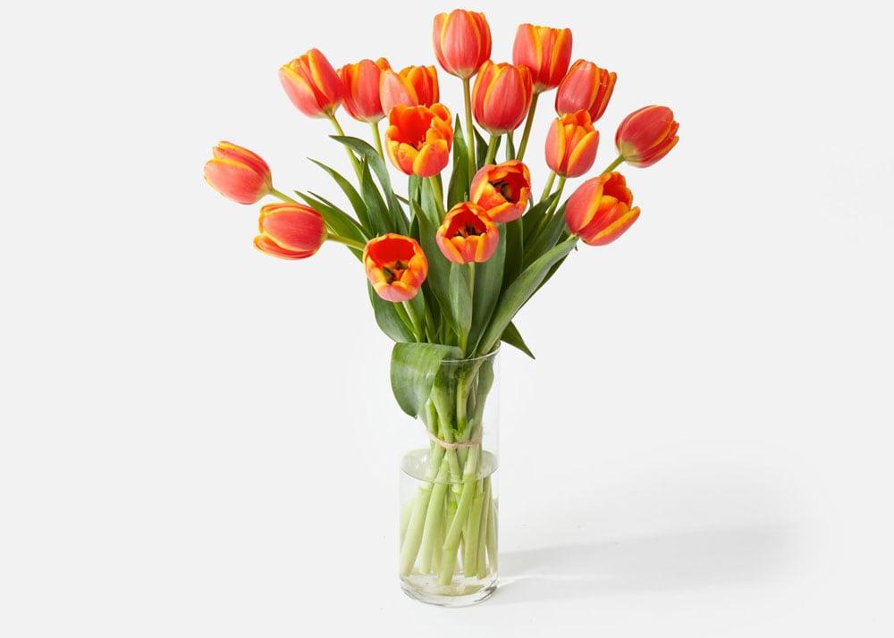 UrbanStems Tulips